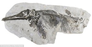 25DEC0AE00000578-0-The_fossilised_which_has_been_named_Ichthyosaurus_anningae_had_l-a-15_1424436408435