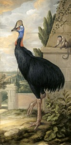 A Cassowary by Francis Barlow (Lincolnshire c.1626 - London 1704)